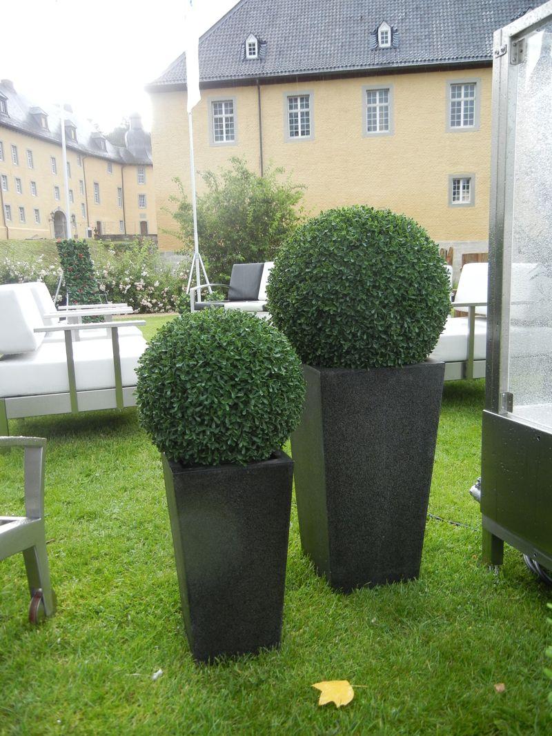 buchskugeln kuw9. Black Bedroom Furniture Sets. Home Design Ideas